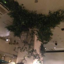 天井に伸びてるグリーンも自然でした。