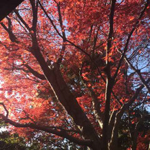 12月紅葉が色付きお喜び頂けた