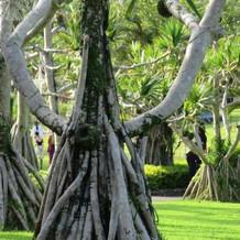 熱帯植物園らしい樹木がある園内