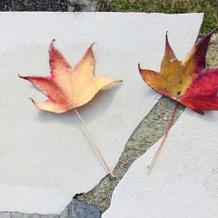 紅葉した落ち葉で雰囲気アップ