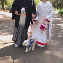 前撮り白無垢 愛犬とも撮影できました