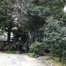 お庭にある竹林