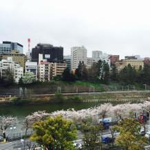 桜の時期の会場前の風景です