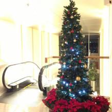 クリスマスだったので、ツリーがありました