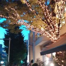 夜は窓から見える木にイルミネーション