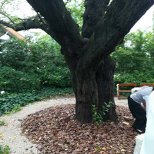 ガーデン。メインの木。