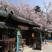 桜の季節にお参りに来れたらなと思います!