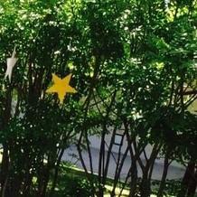 緑の中に揺れる星
