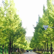 会場までの間に通るメタセコイアの並木道