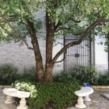 この樹に色々と装飾できます。