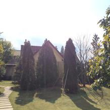 おしゃれな木がたくさんあります
