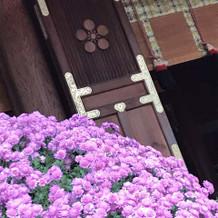 菊の花とのコントラストも綺麗です。