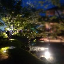 夜の庭園!光に照らされて幻想的