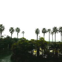 披露宴会場からの景色。ヤシの向こうは海!