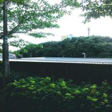 裏門からの眺め。緑にあふれて静寂