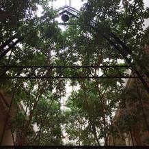 屋内と思えない木々