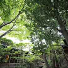 中庭も緑溢れていて写真映えしました