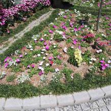 入口のお花