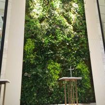 チャペル 壁面緑化