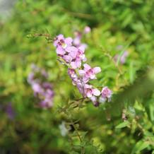 季節を感じる植物が見られるのも魅力。