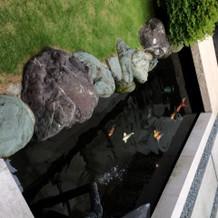 鯉のいる庭もあります
