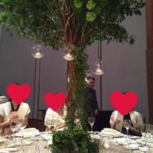 テーブルに木が生えてて素敵でした!