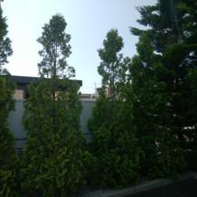邸宅を感じさせる高い木