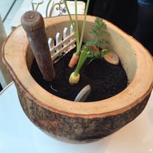 食べられる土に刺さった生野菜