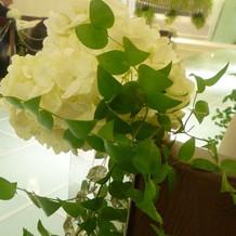 チェペルの花