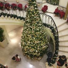 11月中旬から飾られるクリスマスツリー