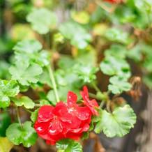 季節によって、異なるお花も咲いています。