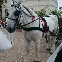 白馬に乗りました