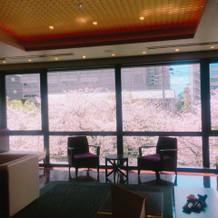 打合せの時に行かせてもらった待合室の桜