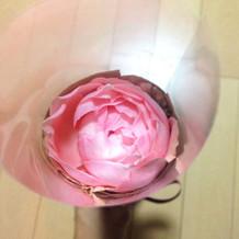 プレゼントでいただいた一輪の薔薇