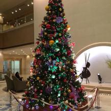 大きなクリスマスツリーがロビーに。