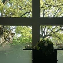 チャペルの窓 その向こう側に見える木