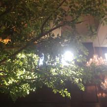 会場内に大きな木と窓があり開放的でした