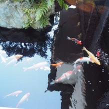 披露宴会場のお庭にある池