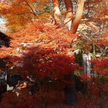 紅葉がたくさんあります