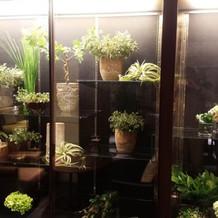 装花の室温をきちんと管理しています