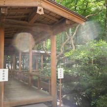 神殿に続く杉回廊の入り口