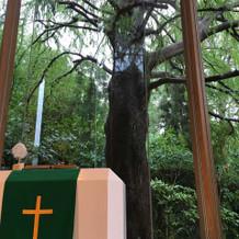 大きな木があり、神聖な感じがしました。
