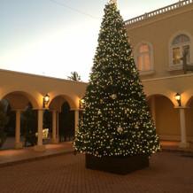 外観、冬なので大きいツリーが!