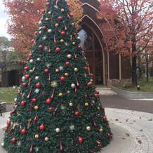 12月はツリーが出ます