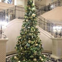 正面玄関階段付近の木はクリスマス仕様でし