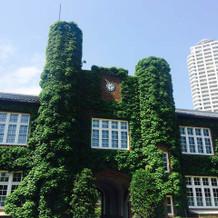 5月は本館の蔦がきれいな季節です。