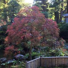 神社の中庭の紅葉した木