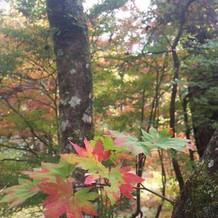 紅葉途中の紅葉。
