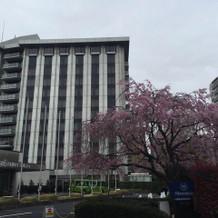 春なので入り口の桜がとても綺麗でした