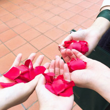 赤バラの生花でのフラワーシャワー